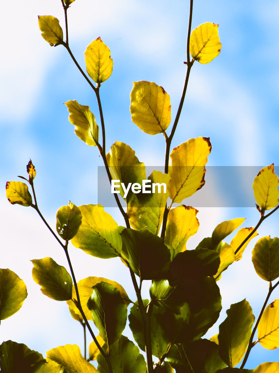 growth, plant, yellow, beauty in nature, low angle view, leaf, plant part, no people, sky, nature, close-up, flower, day, flowering plant, outdoors, freshness, fragility, vulnerability, tree, branch