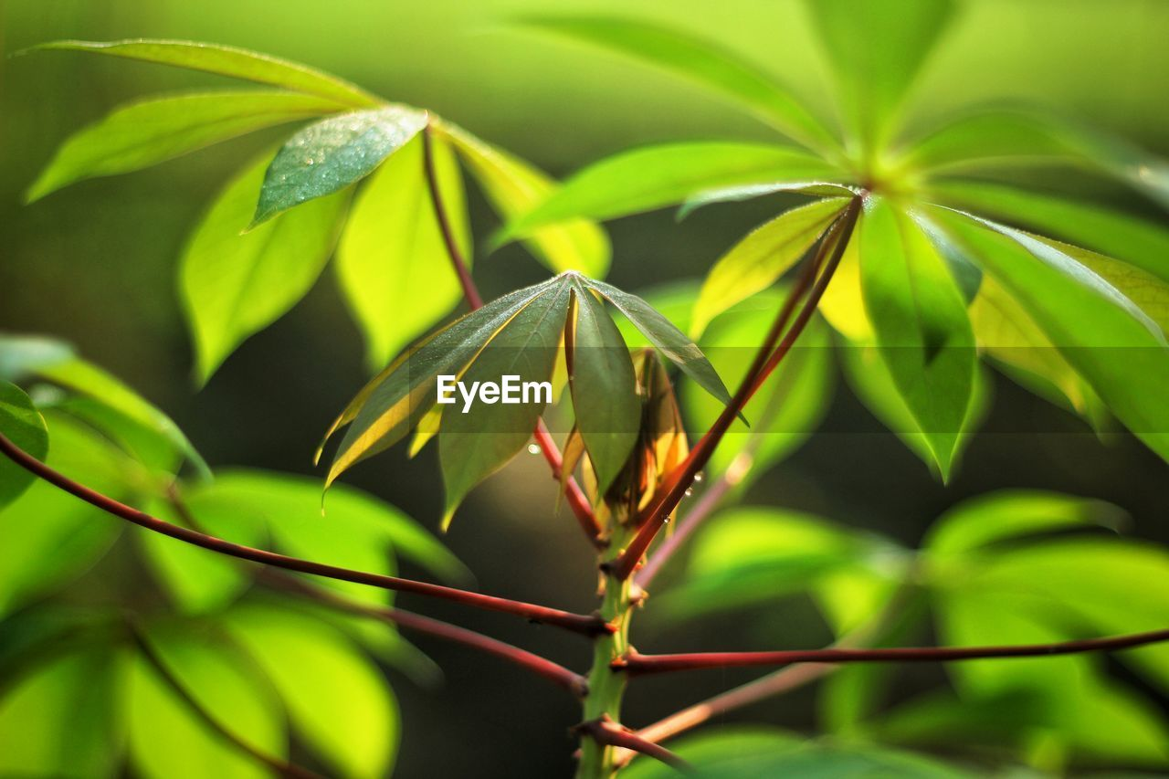 green color, leaf, growth, nature, plant, no people, outdoors, beauty in nature, day, close-up, animal themes, freshness