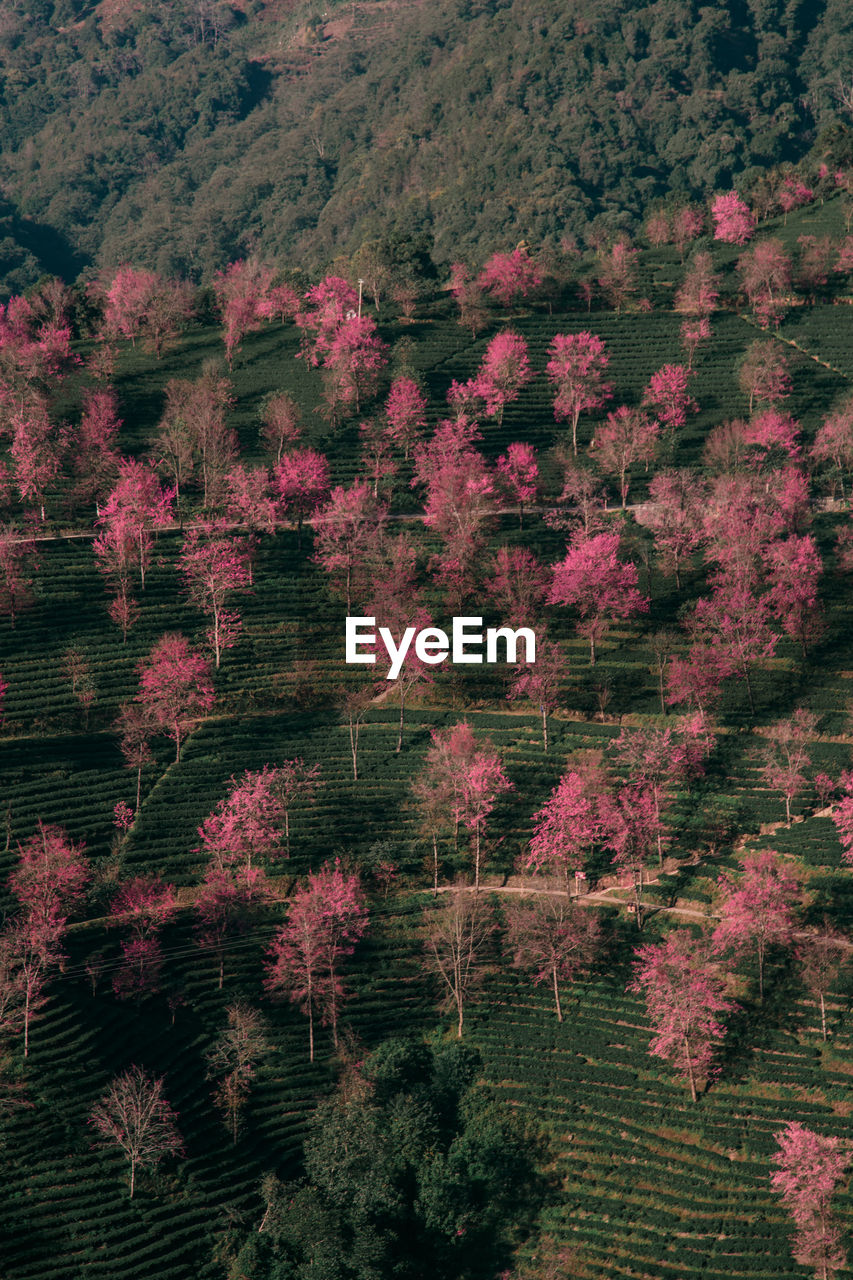HIGH ANGLE VIEW OF FLOWERS GROWING ON TREE