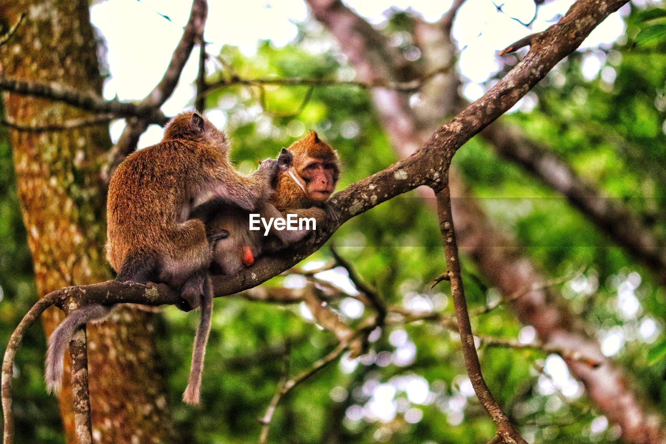 Low angle view of monkey sitting on tree in forest