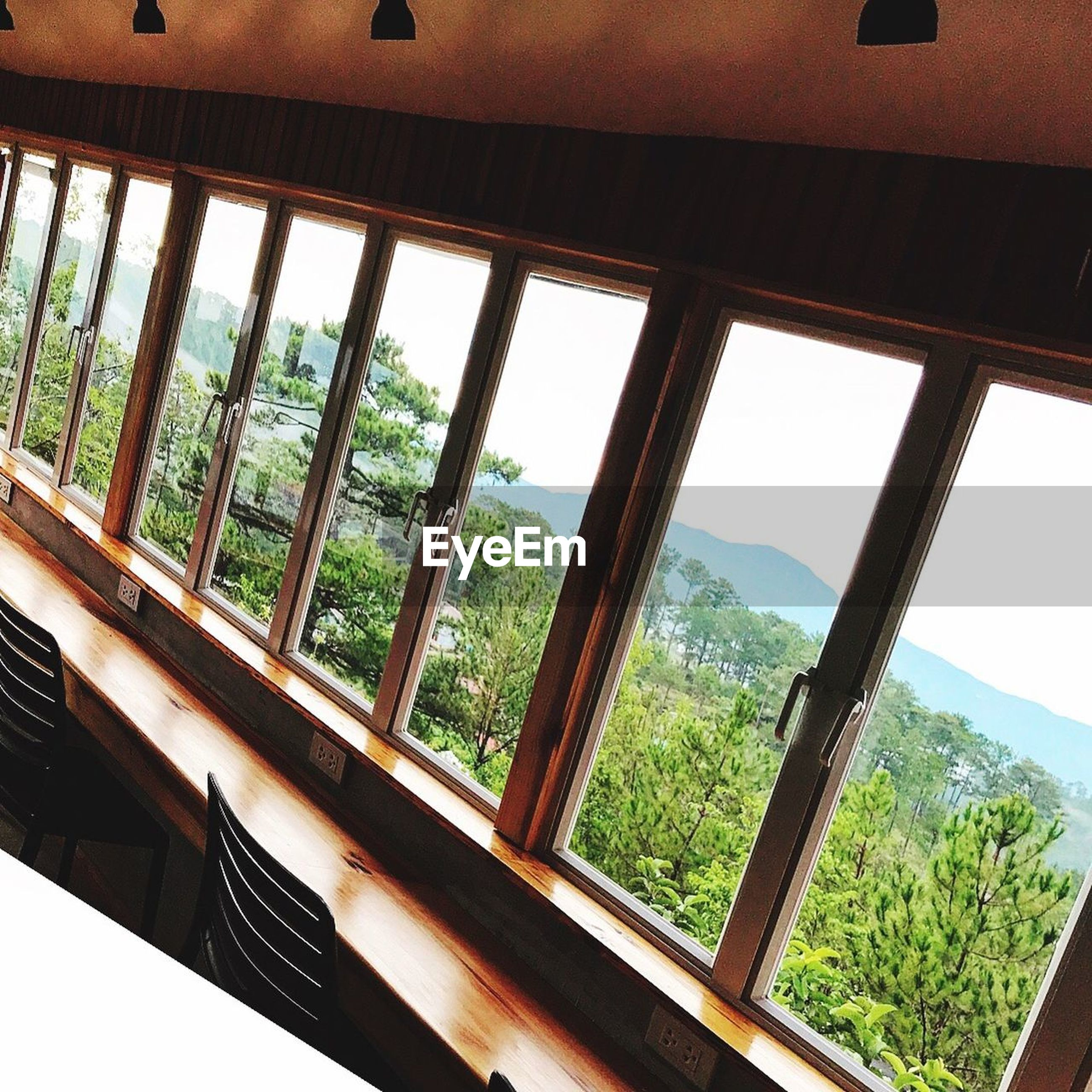 window, indoors, day, tree, no people, home interior, nature, architecture, built structure, close-up, sky