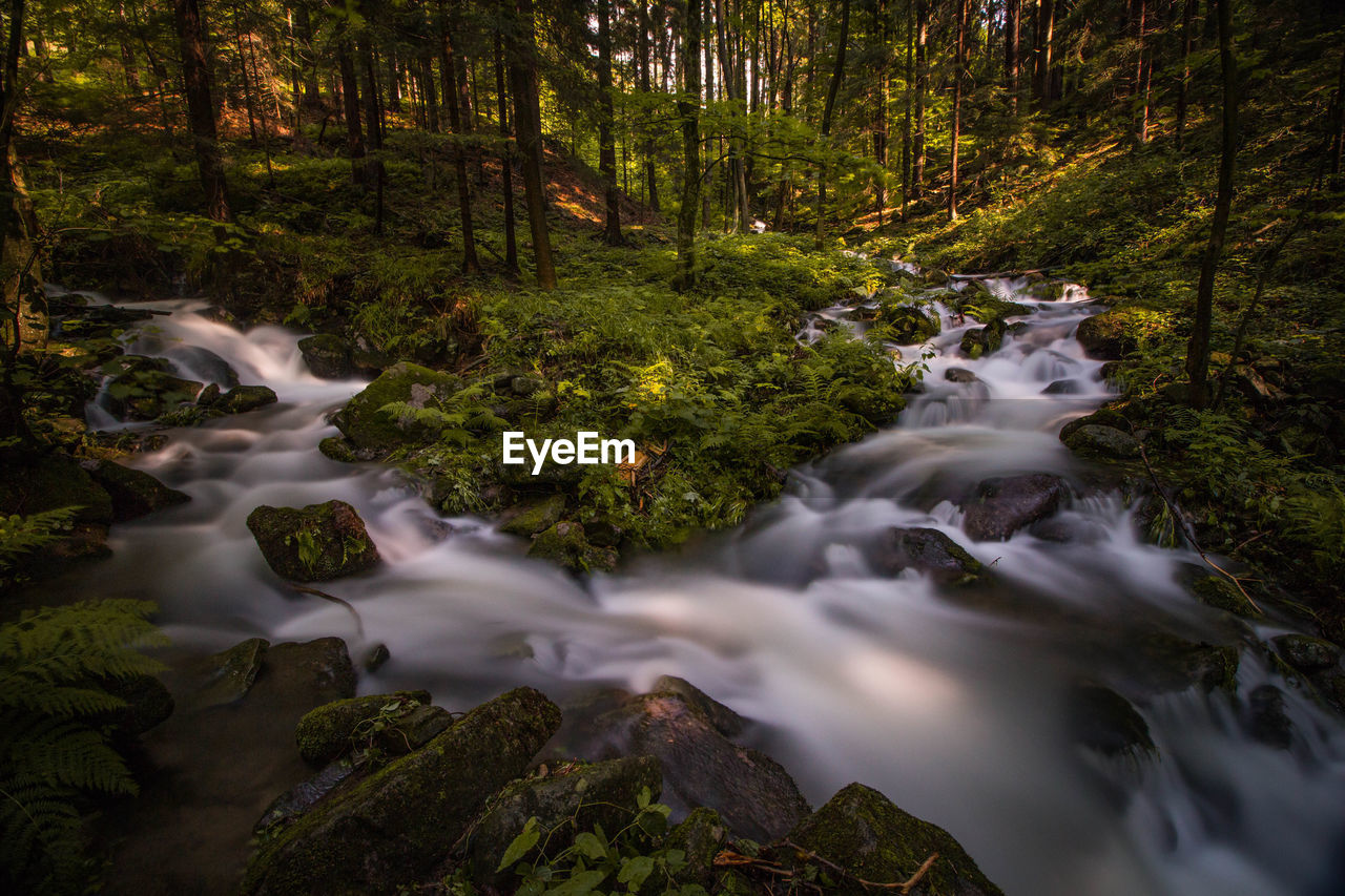 SCENIC VIEW OF STREAM FLOWING THROUGH FOREST