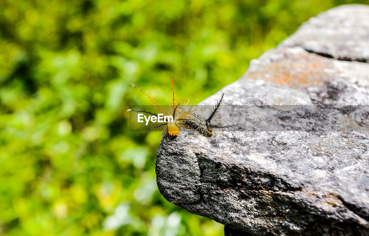 High Angle View Of Caterpillars On Rock