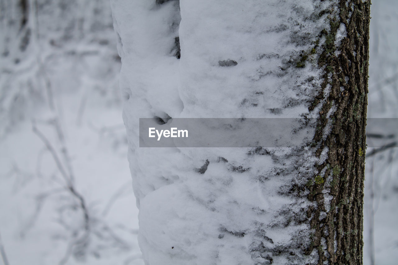 winter, snow, cold temperature, white color, nature, day, no people, outdoors, close-up, tree, tree trunk, beauty in nature