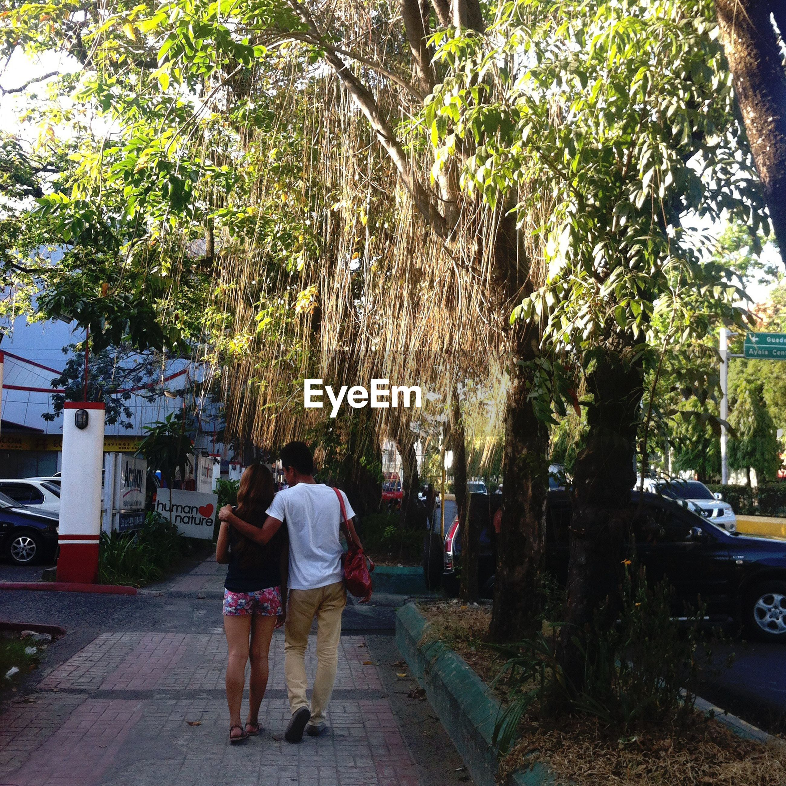 tree, rear view, men, lifestyles, walking, person, full length, street, transportation, the way forward, leisure activity, footpath, road, sidewalk, city life, togetherness, casual clothing