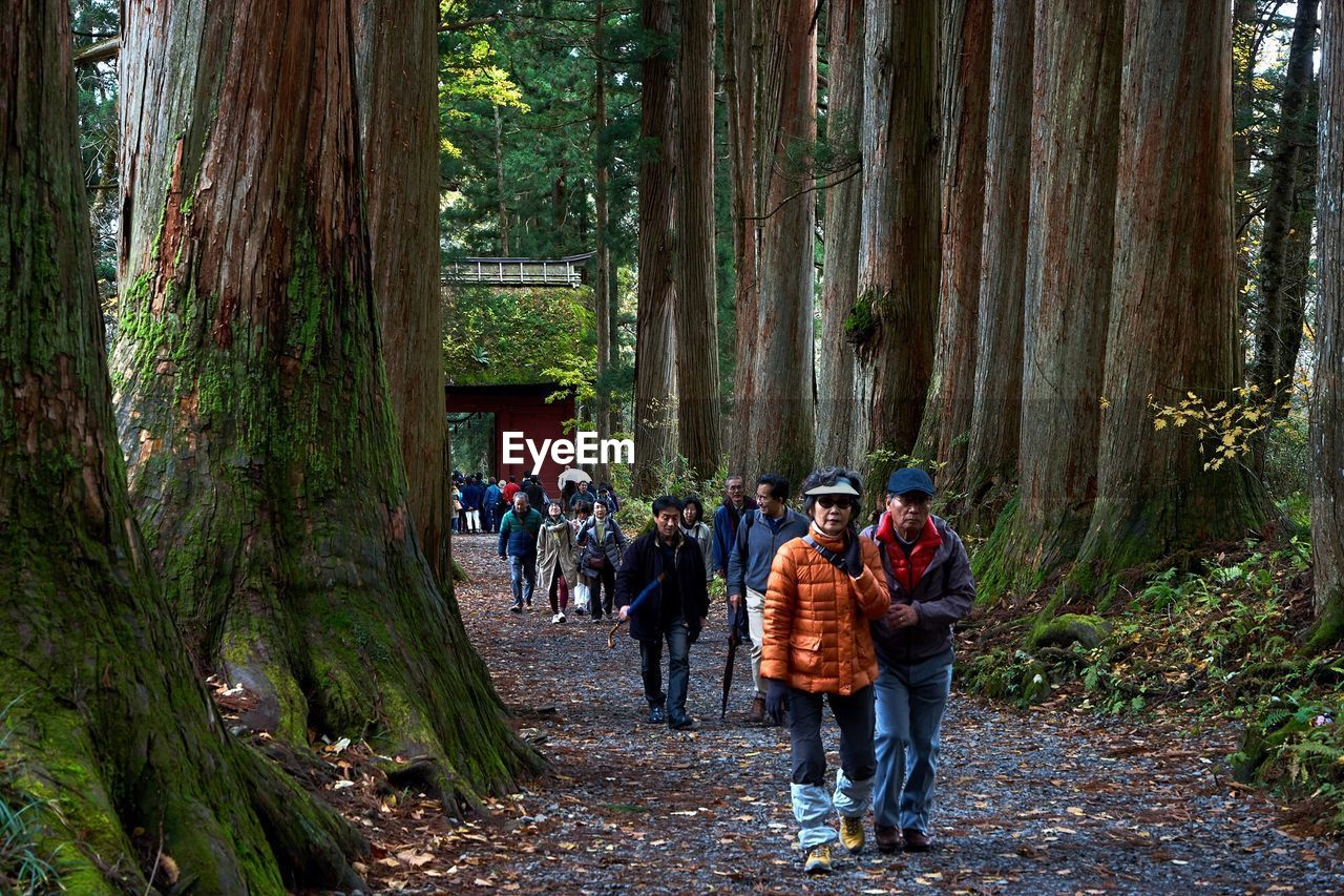 real people, tree, large group of people, men, nature, forest, walking, leisure activity, day, women, outdoors, full length, beauty in nature, people, adult, adults only