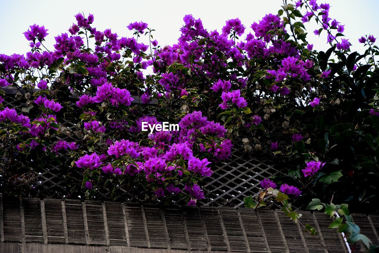 flower, purple, growth, nature, no people, fragility, outdoors, plant, beauty in nature, freshness, day
