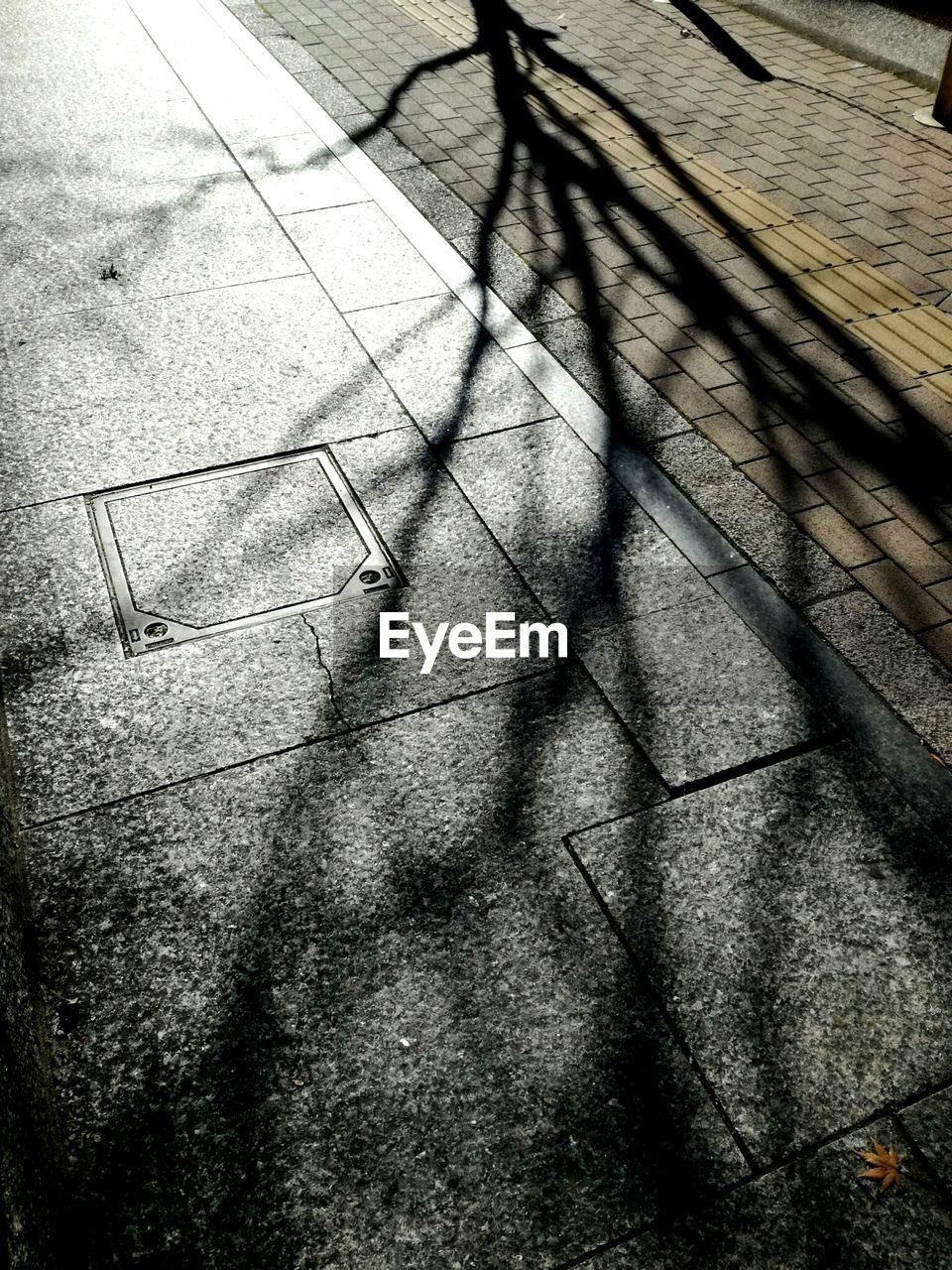 shadow, high angle view, day, sunlight, outdoors, low section, no people, nature, close-up