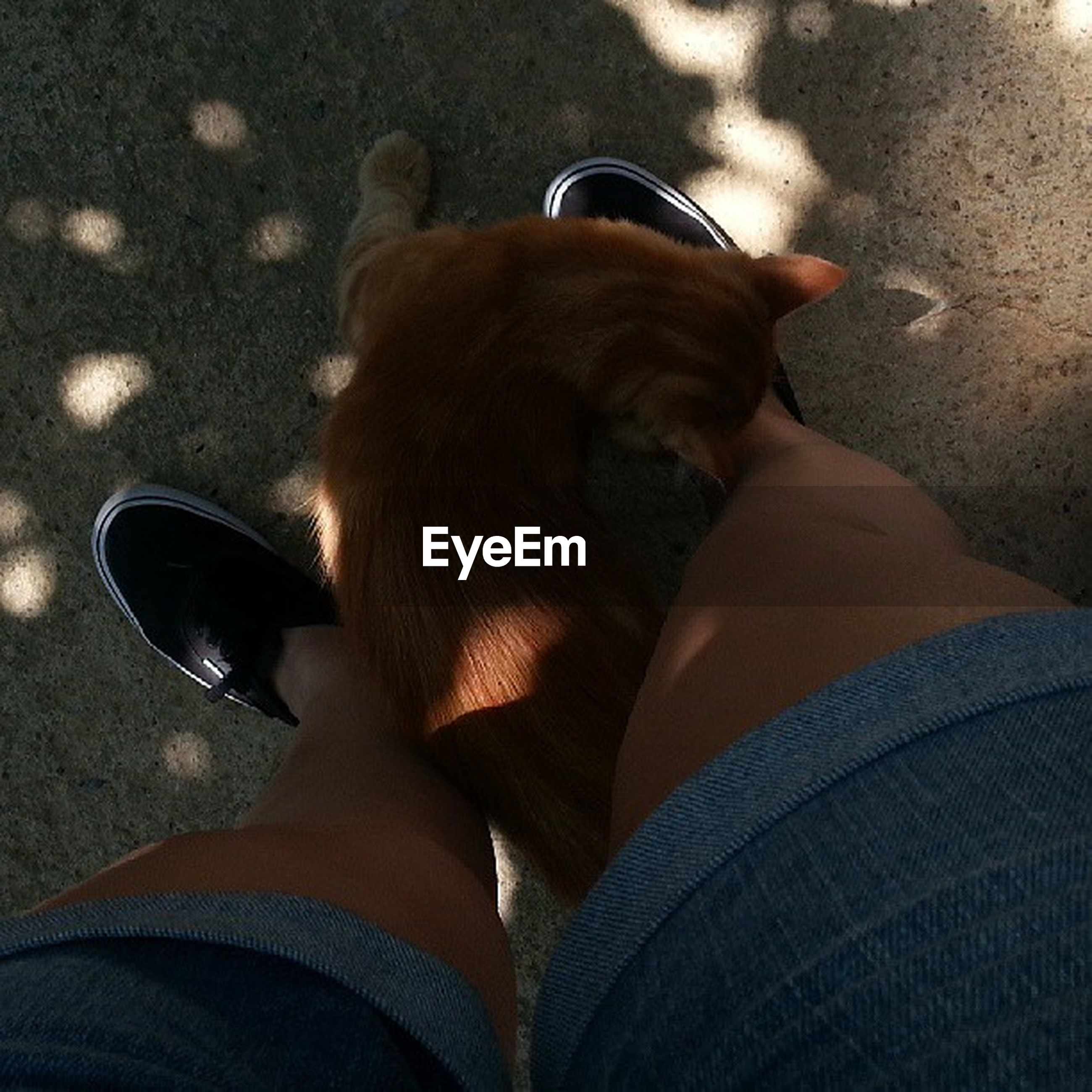 low section, person, lifestyles, personal perspective, leisure activity, high angle view, togetherness, relaxation, animal themes, sitting, one animal, dog, human foot, men, bonding, pets