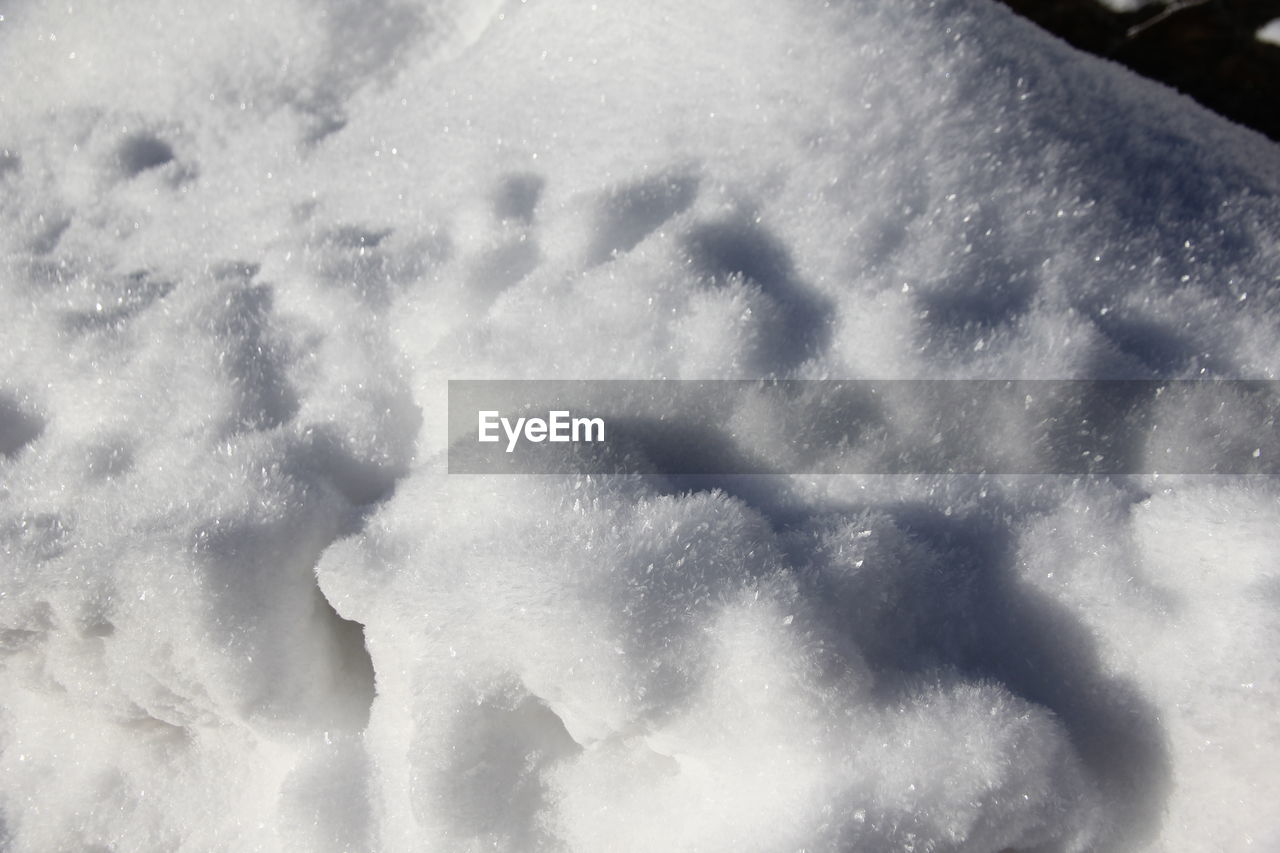 nature, day, no people, snow, winter, cold temperature, outdoors, beauty in nature, close-up