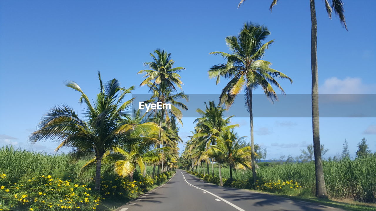 plant, sky, road, tree, transportation, growth, direction, tropical climate, beauty in nature, palm tree, nature, the way forward, no people, symbol, scenics - nature, day, land, sign, green color, tranquil scene, diminishing perspective, outdoors