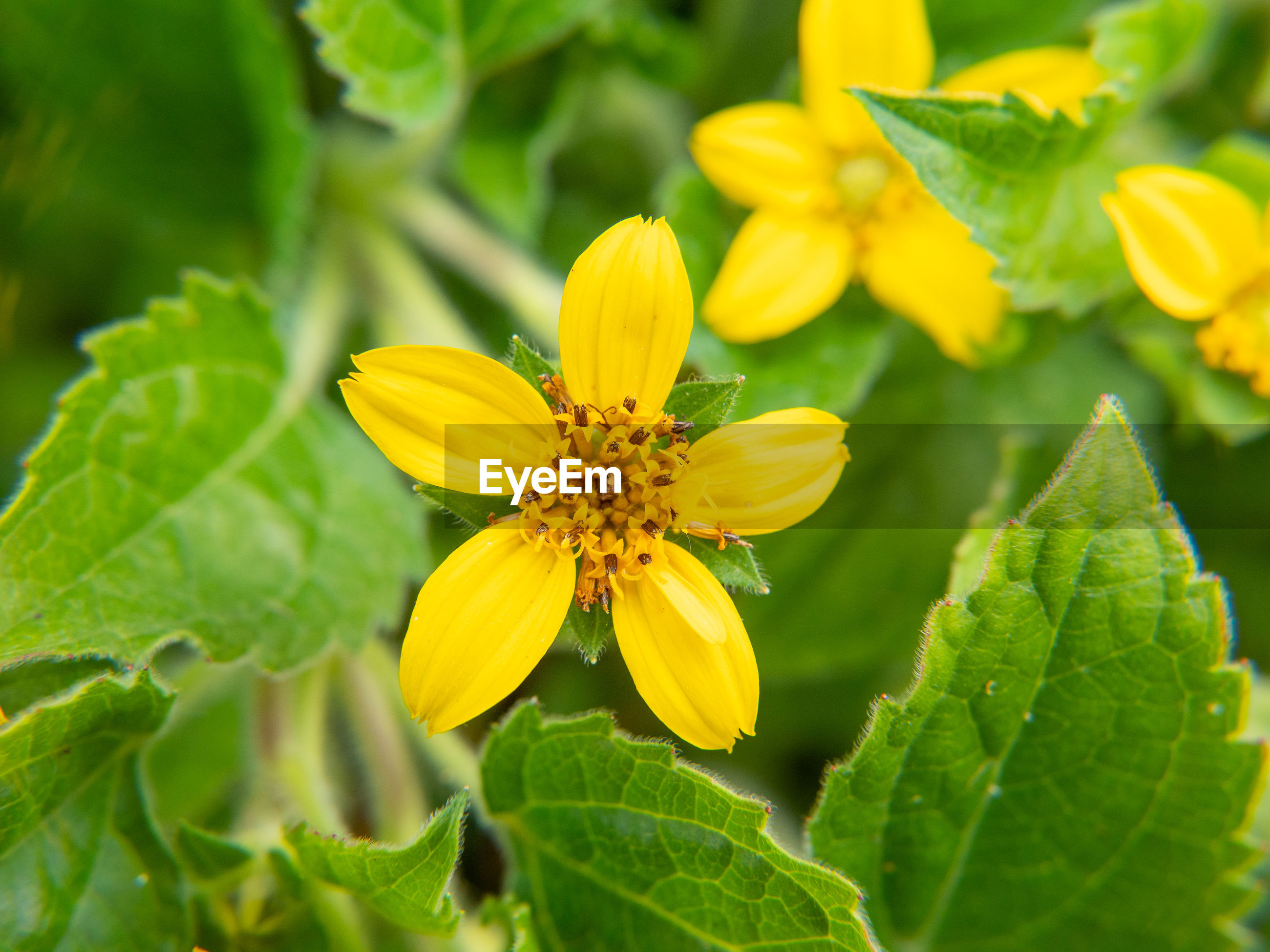 CLOSE-UP OF YELLOW FLOWERING PLANT ON LEAF