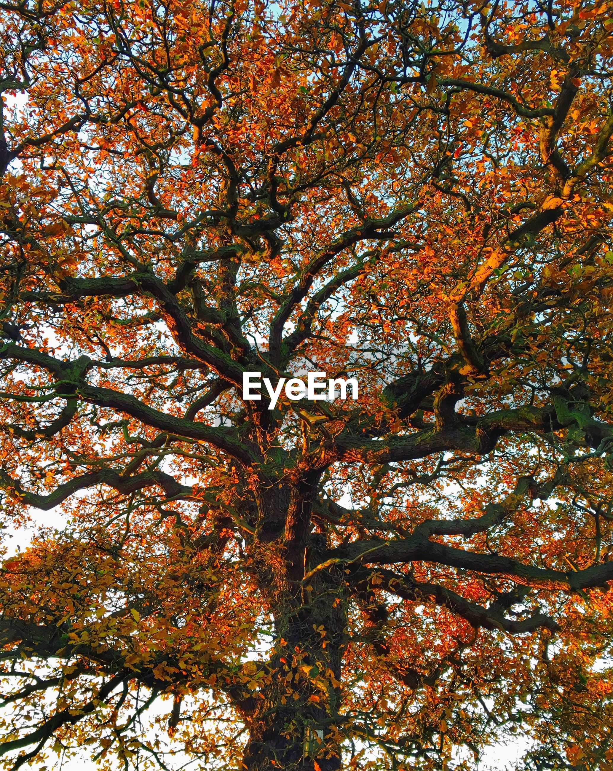 low angle view, tree, nature, full frame, no people, beauty in nature, backgrounds, branch, growth, day, autumn, tranquility, outdoors, sky, close-up