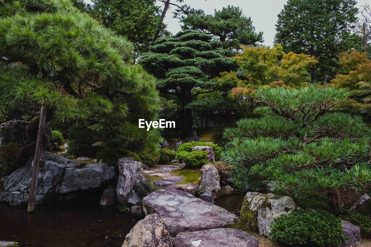 plant, tree, growth, green color, nature, beauty in nature, no people, tranquility, formal garden, garden, solid, water, rock, day, scenics - nature, tranquil scene, foliage, lush foliage, rock - object, park, outdoors