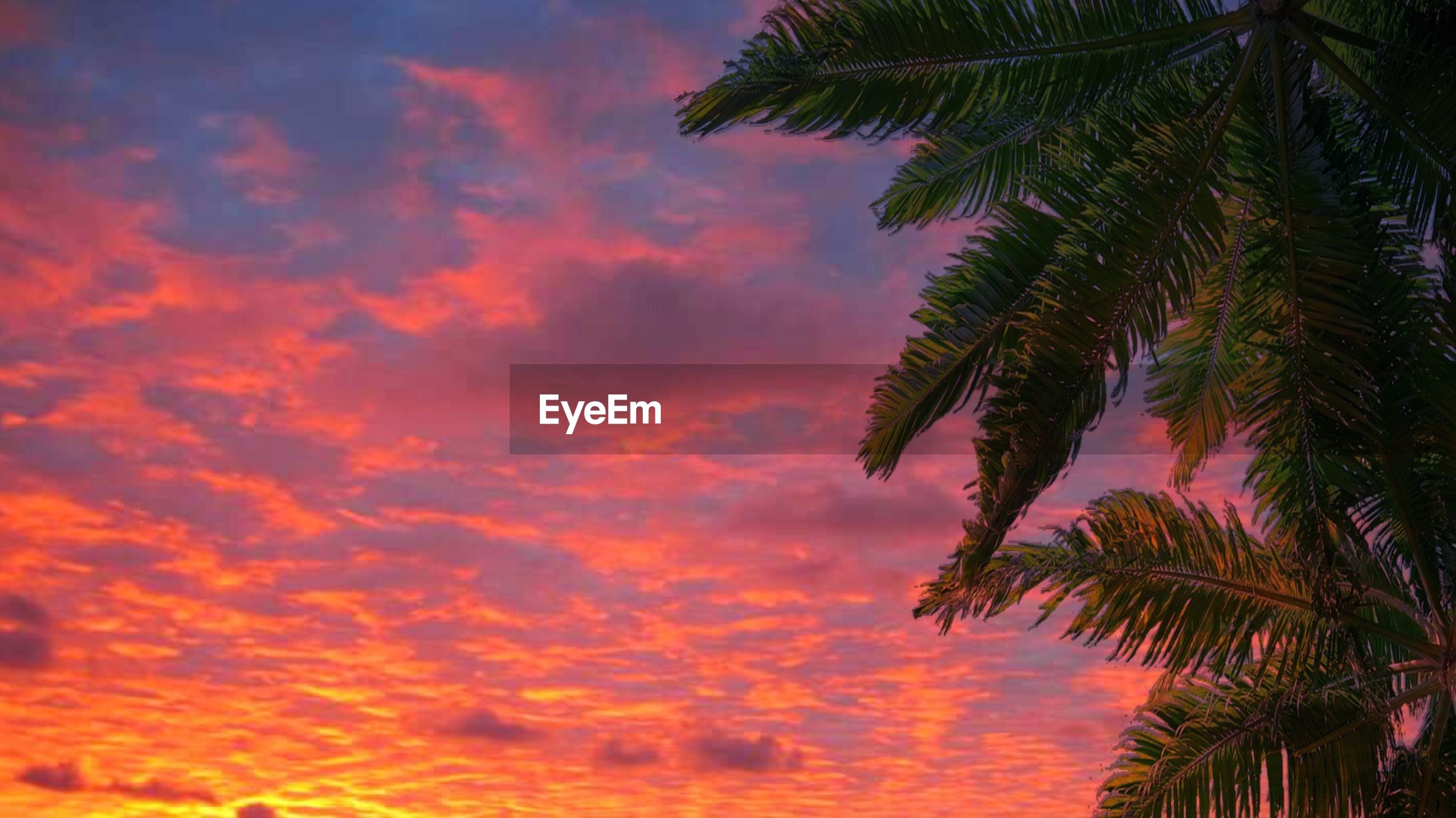 LOW ANGLE VIEW OF PALM TREES AGAINST ORANGE SKY