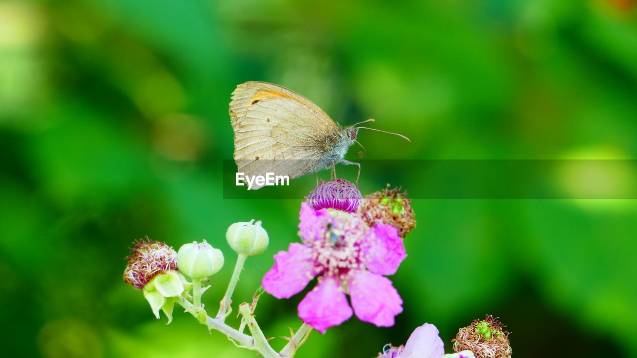 insect, flower, animals in the wild, fragility, butterfly - insect, nature, animal themes, one animal, plant, focus on foreground, growth, no people, beauty in nature, petal, animal wildlife, freshness, day, close-up, outdoors, flower head, pollination, perching