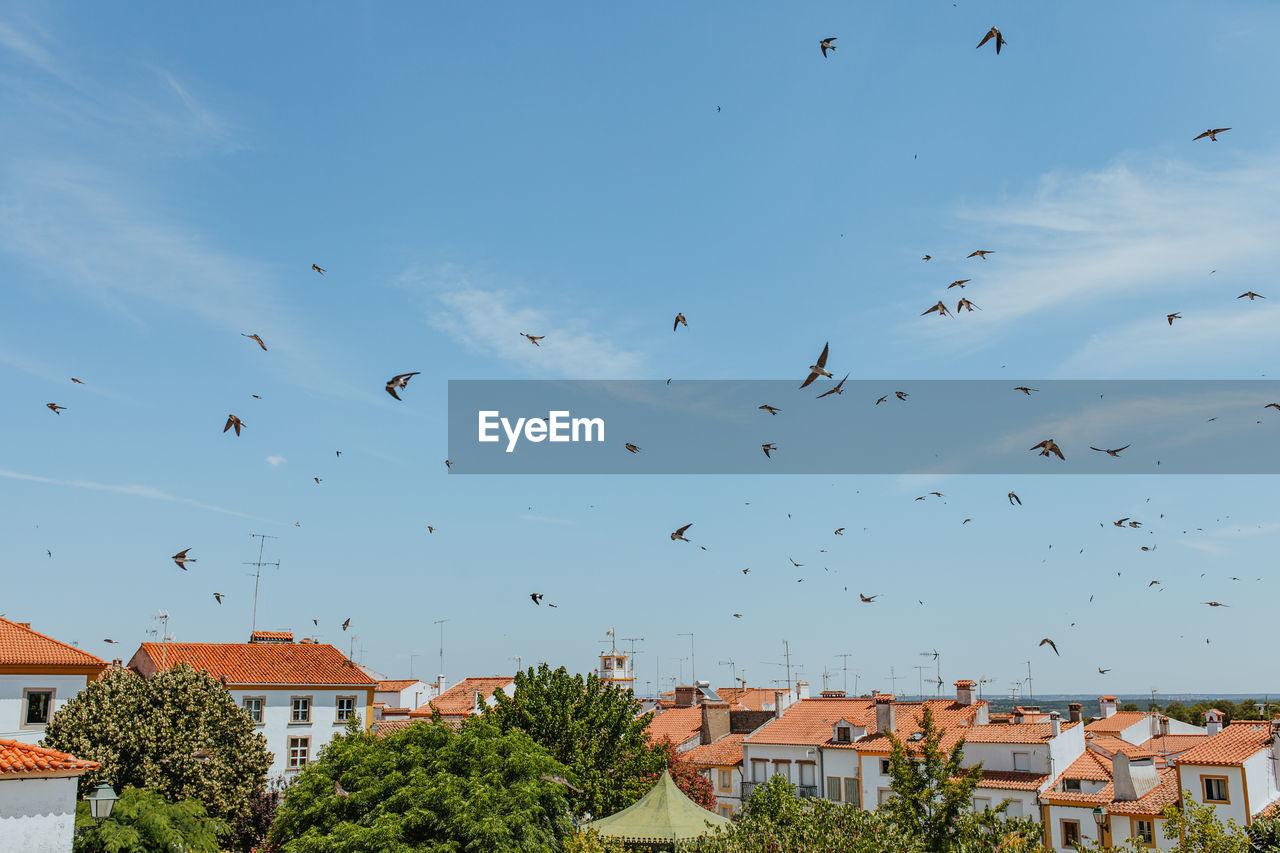 Flock of birds flying over town