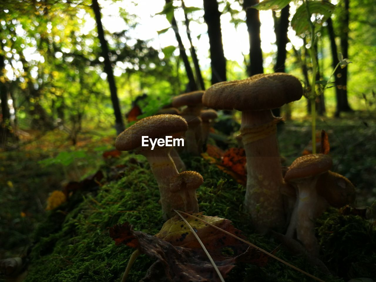 mushroom, growth, nature, fungus, toadstool, fly agaric, growing, no people, beauty in nature, forest, tranquility, focus on foreground, outdoors, tree, close-up, day, fly agaric mushroom