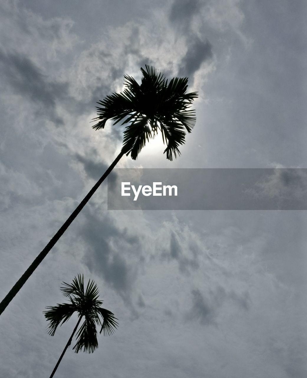 palm tree, low angle view, sky, cloud - sky, tree, beauty in nature, palm frond, outdoors, day, nature, growth, tree trunk, no people, scenics