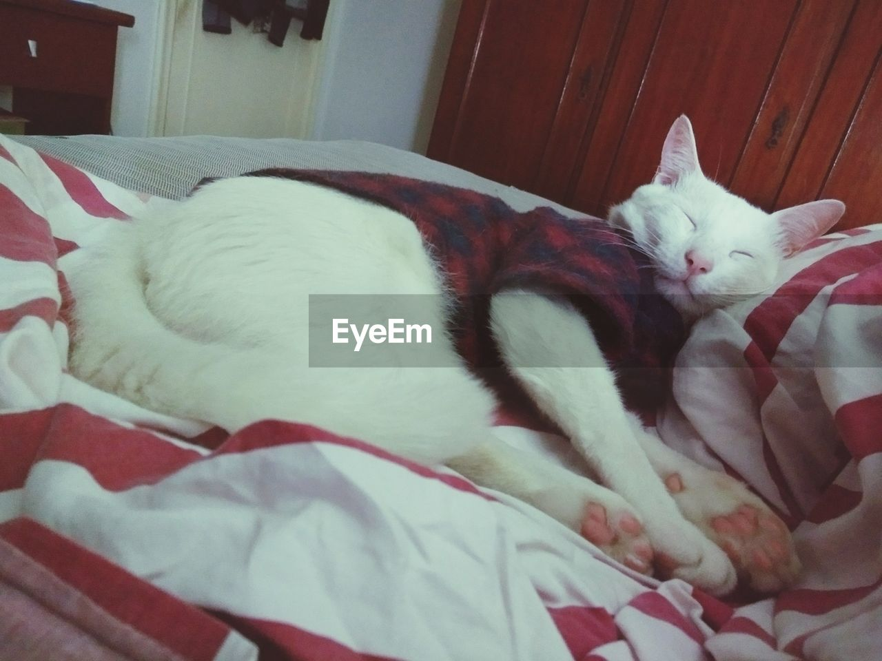 pets, domestic, domestic animals, mammal, animal themes, animal, one animal, vertebrate, relaxation, indoors, bed, domestic cat, cat, sleeping, resting, feline, furniture, no people, lying down, close-up, whisker, duvet