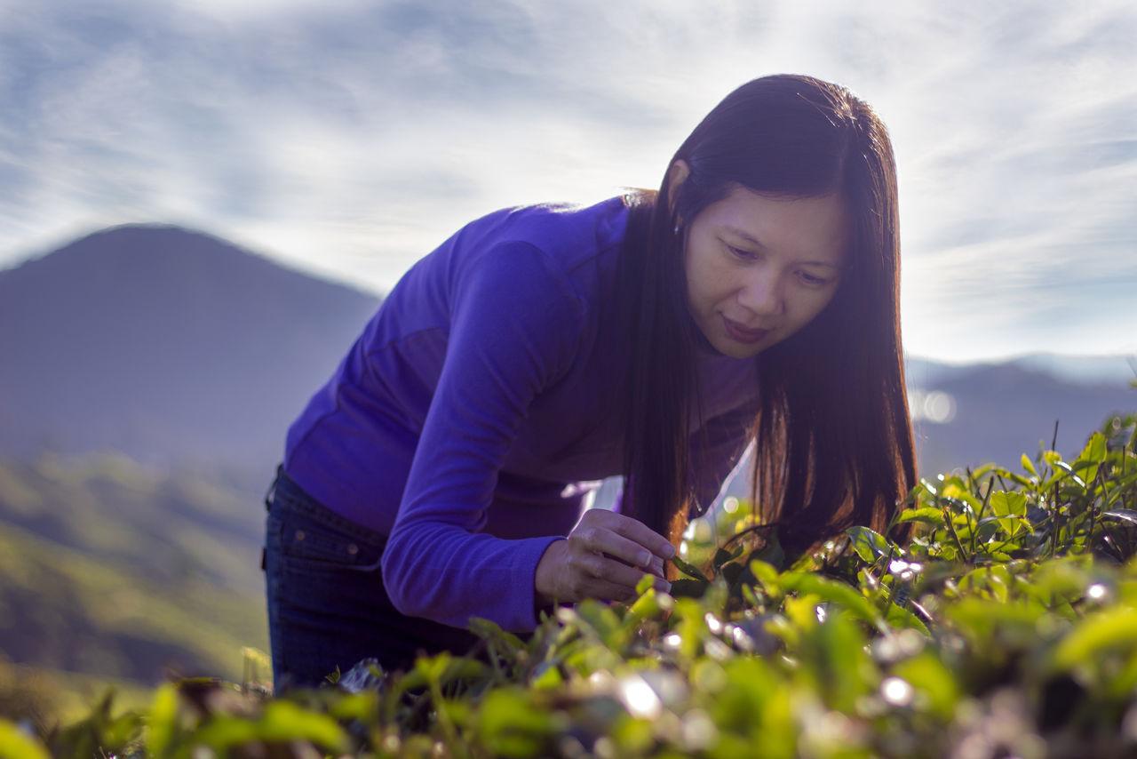 Woman picking fresh tea leaves at farm