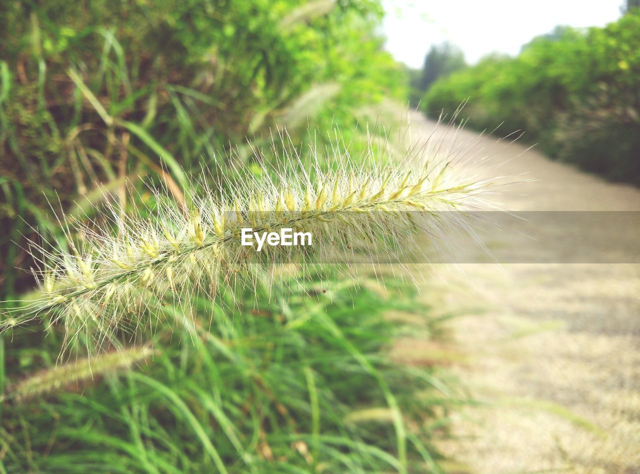 growth, nature, plant, no people, beauty in nature, focus on foreground, outdoors, close-up, day, fragility, freshness, grass, flower