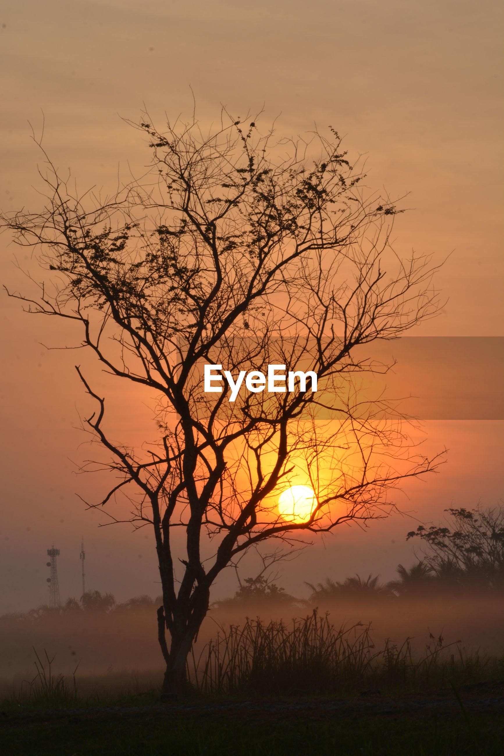BARE TREE ON FIELD AGAINST ORANGE SKY
