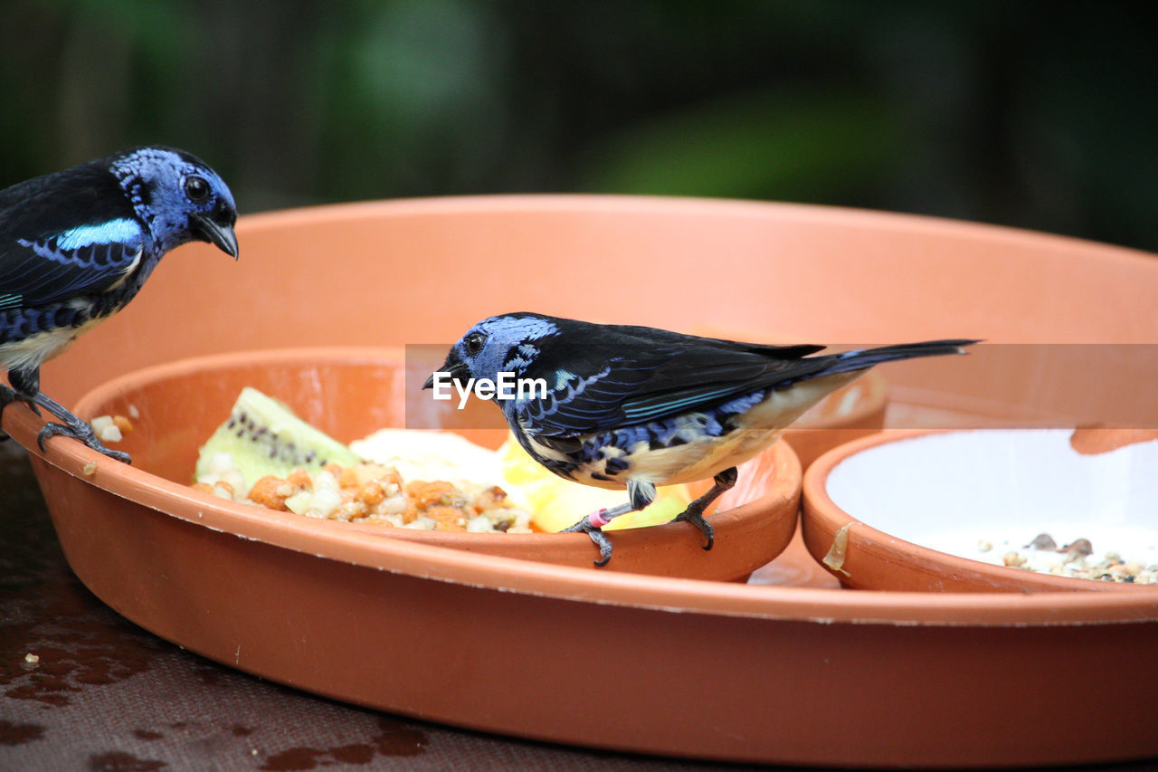 bird, vertebrate, animal wildlife, animal, animals in the wild, animal themes, focus on foreground, food, group of animals, eating, no people, day, close-up, perching, two animals, food and drink, feeding, nature, bowl