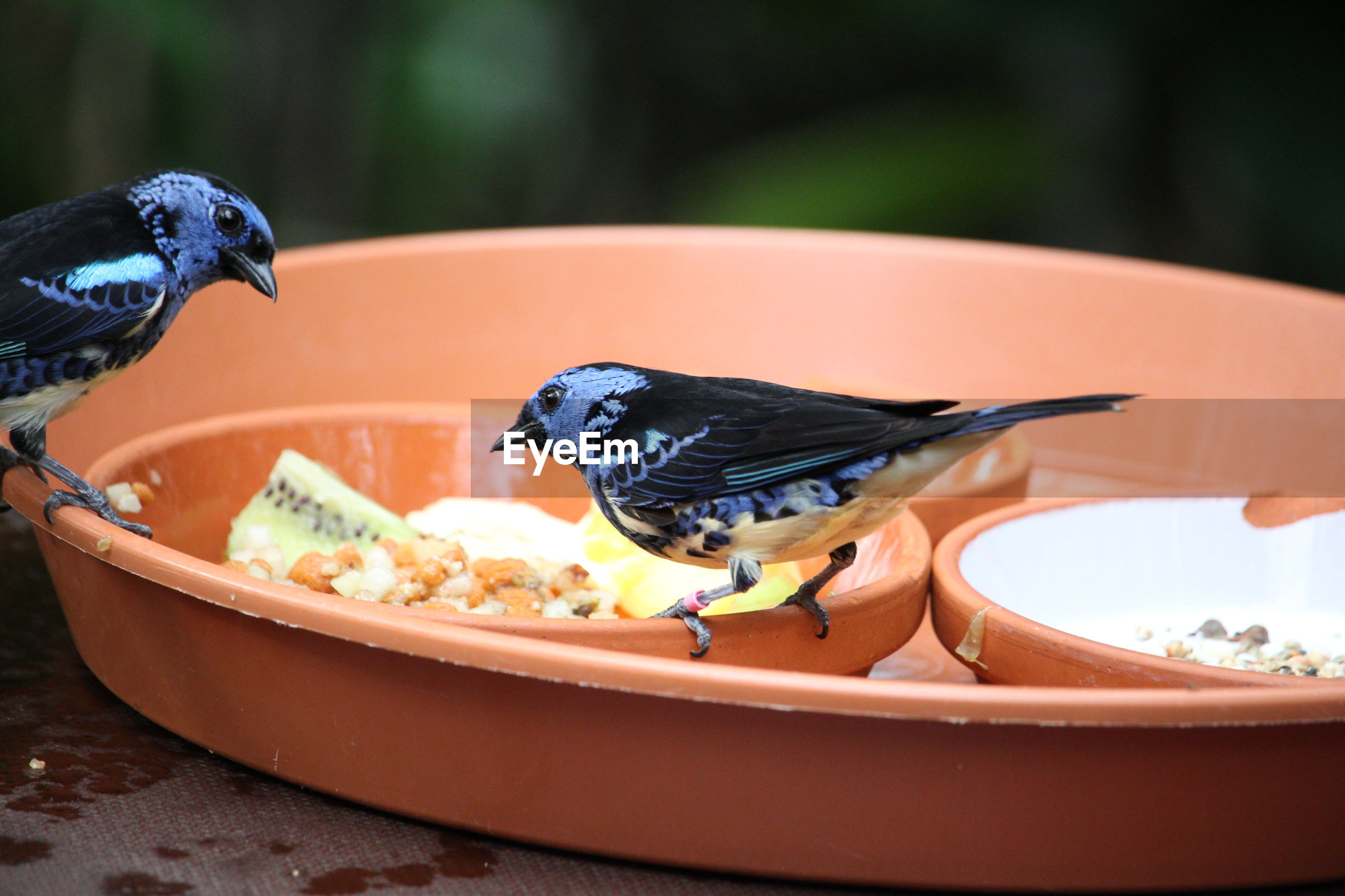 Close-up of two birds on a food bowl looking at each other