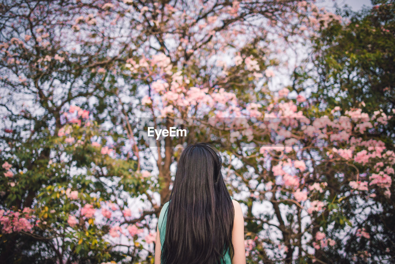 plant, flower, flowering plant, tree, hairstyle, long hair, hair, headshot, rear view, beauty in nature, pink color, nature, day, growth, one person, freshness, blossom, lifestyles, adult, leisure activity, springtime, outdoors, human hair, cherry blossom, cherry tree