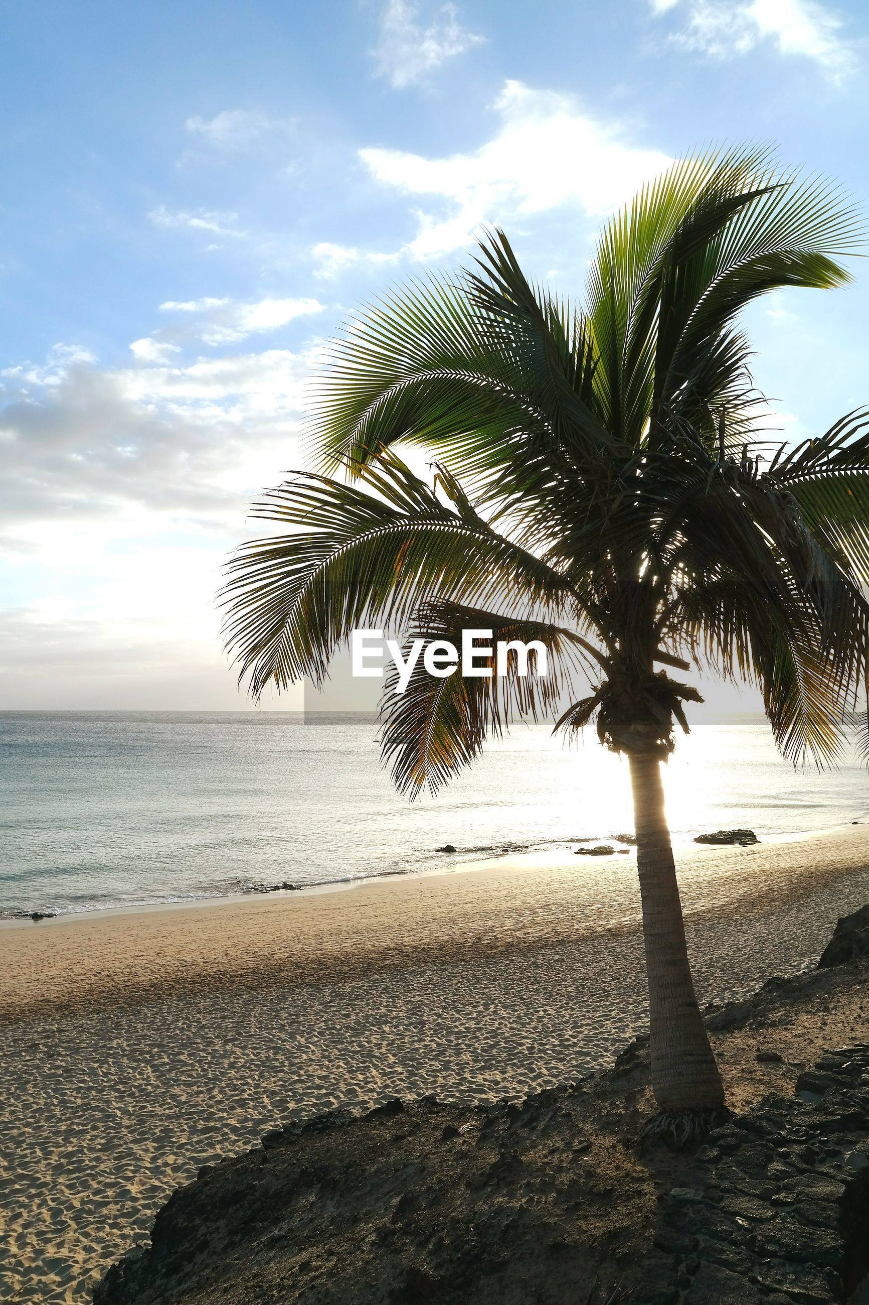 Palm tree growing on beach against sky