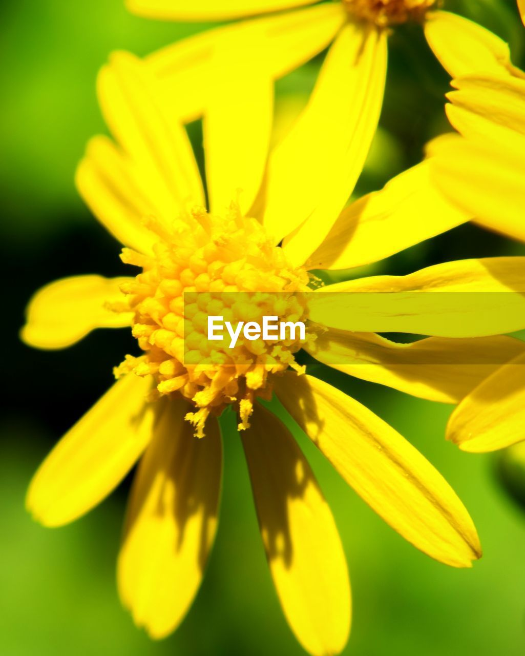 flower, yellow, petal, fragility, flower head, beauty in nature, freshness, nature, growth, close-up, selective focus, plant, pollen, no people, day, blooming, outdoors, springtime