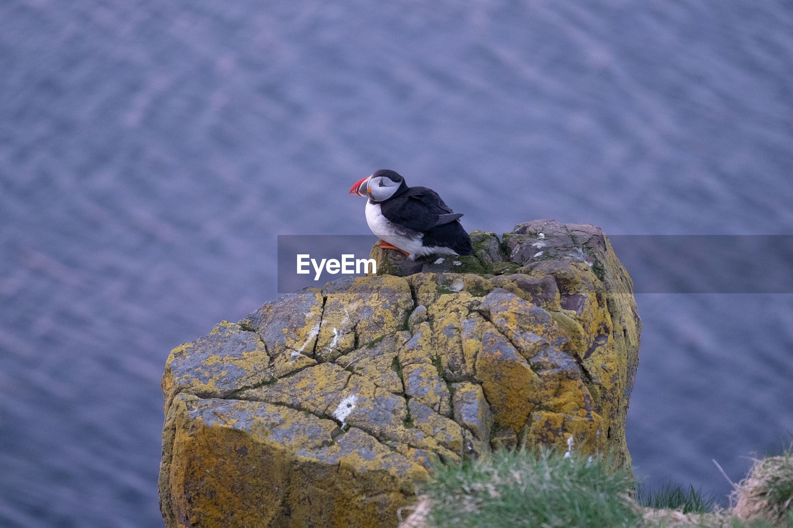 High angle view of puffin on cliff against sea
