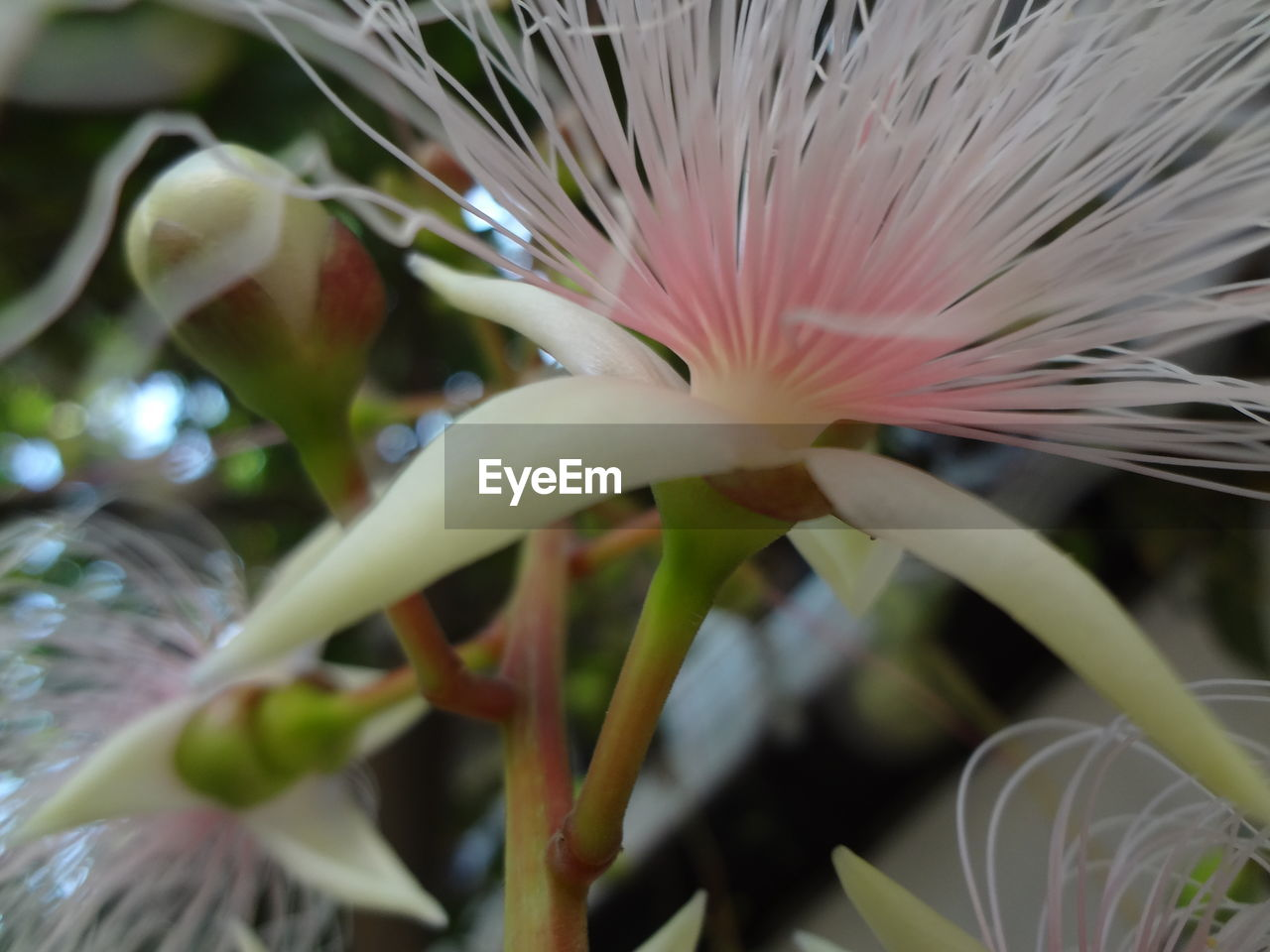 close-up, no people, beauty in nature, nature, fragility, freshness, growth, flower, plant, water, outdoors, day, flower head, undersea