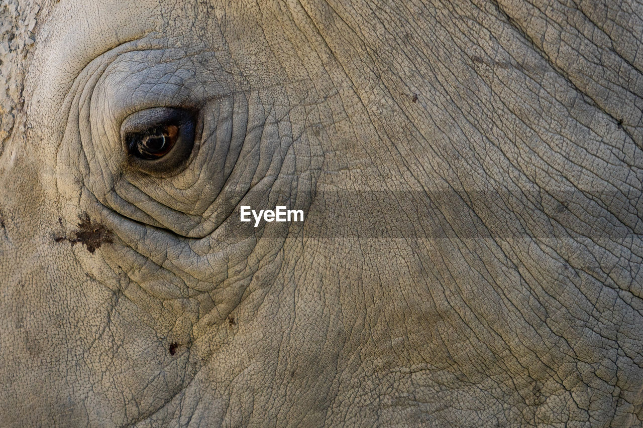 animal themes, animal, animal body part, elephant, animal wildlife, one animal, no people, animals in the wild, close-up, backgrounds, animal skin, textured, full frame, gray, animal eye, nature, mammal, animal head, outdoors