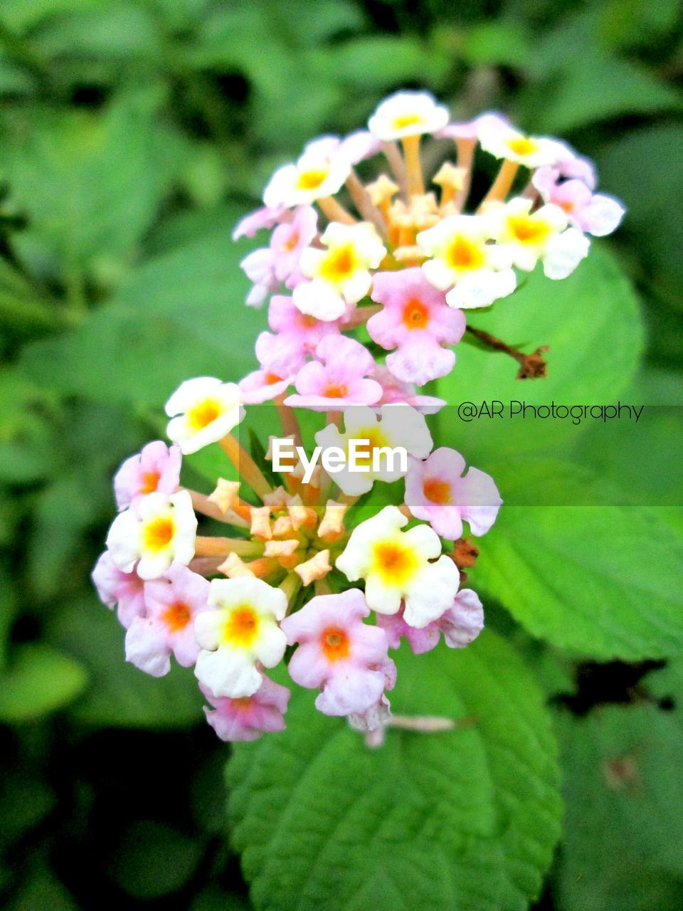 flower, freshness, beauty in nature, petal, nature, fragility, day, close-up, no people, flower head, plant, focus on foreground, outdoors, growth, blooming