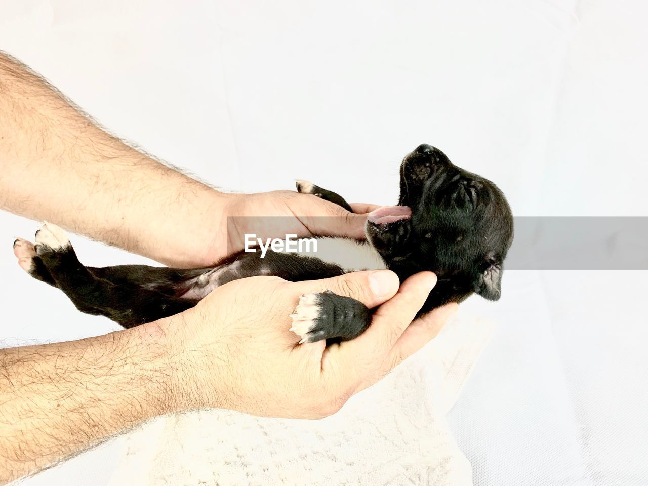 Cropped hands of man holding dog