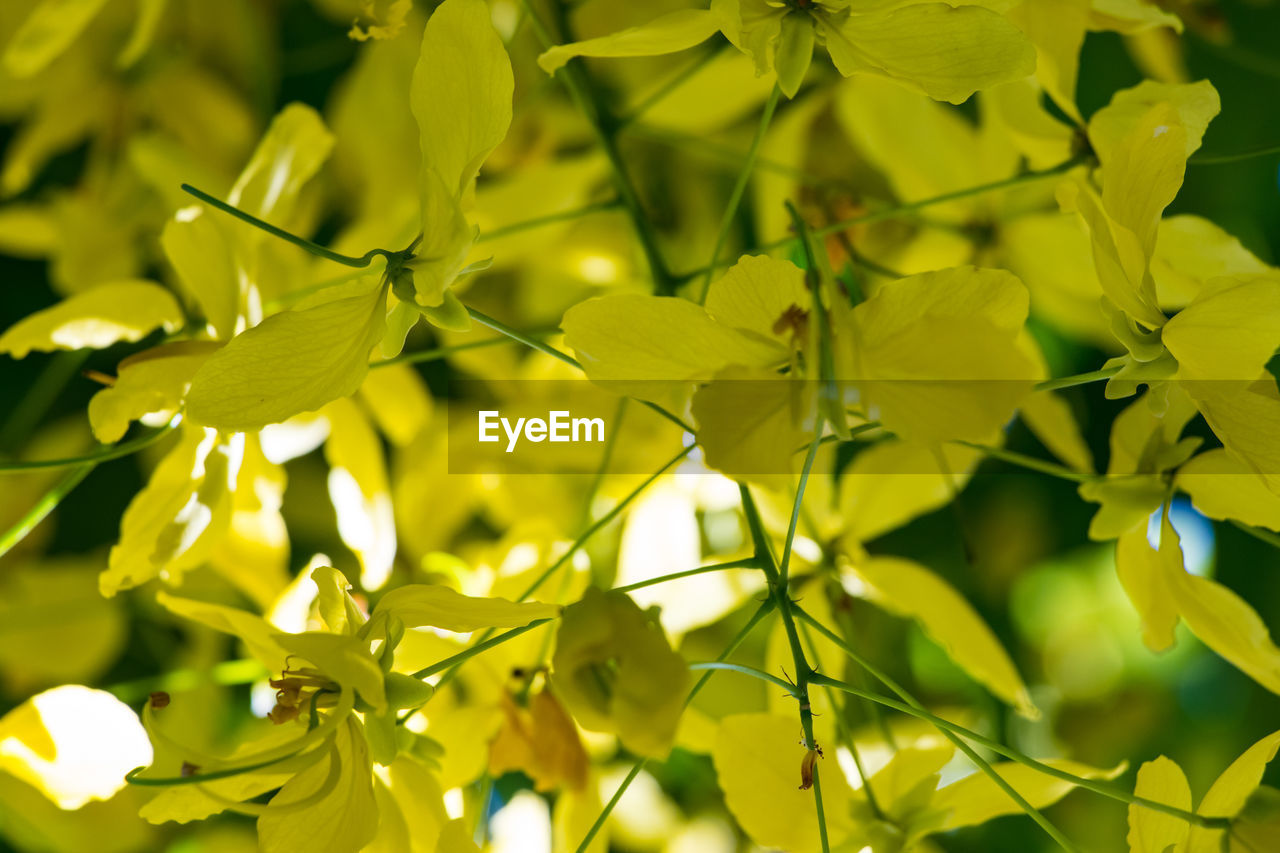 plant, growth, beauty in nature, no people, close-up, day, yellow, flower, plant part, flowering plant, nature, backgrounds, leaf, full frame, green color, outdoors, selective focus, focus on foreground, vulnerability, freshness