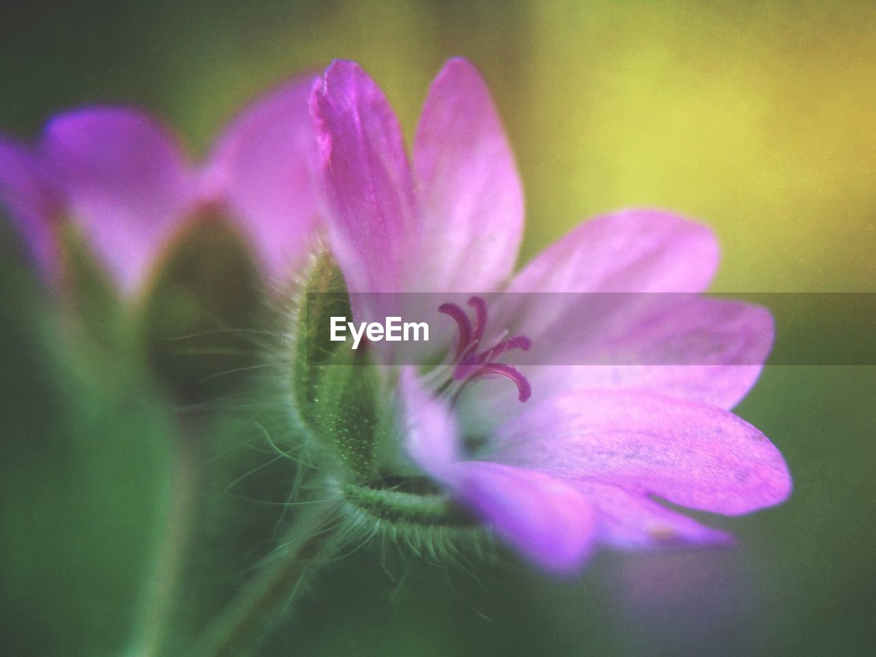 flower, nature, petal, beauty in nature, fragility, growth, plant, no people, freshness, flower head, close-up, outdoors, blooming, day
