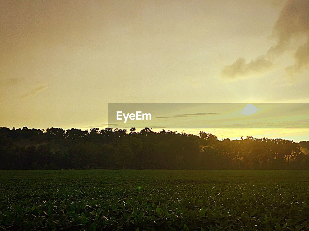 field, tree, beauty in nature, nature, sunset, tranquil scene, no people, tranquility, landscape, sky, grass, scenics, growth, outdoors, day