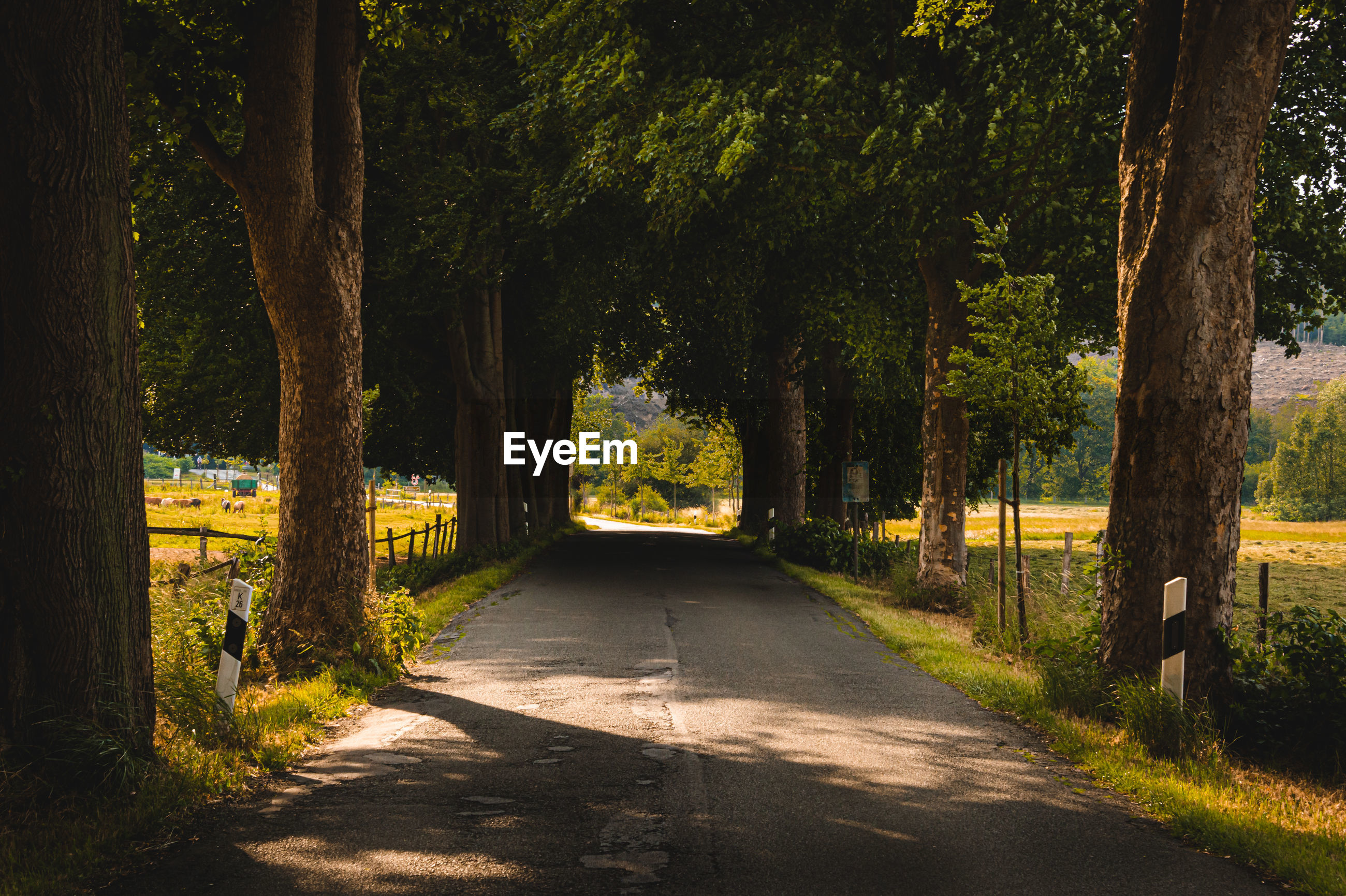 EMPTY ROAD AMIDST TREES AND PLANTS