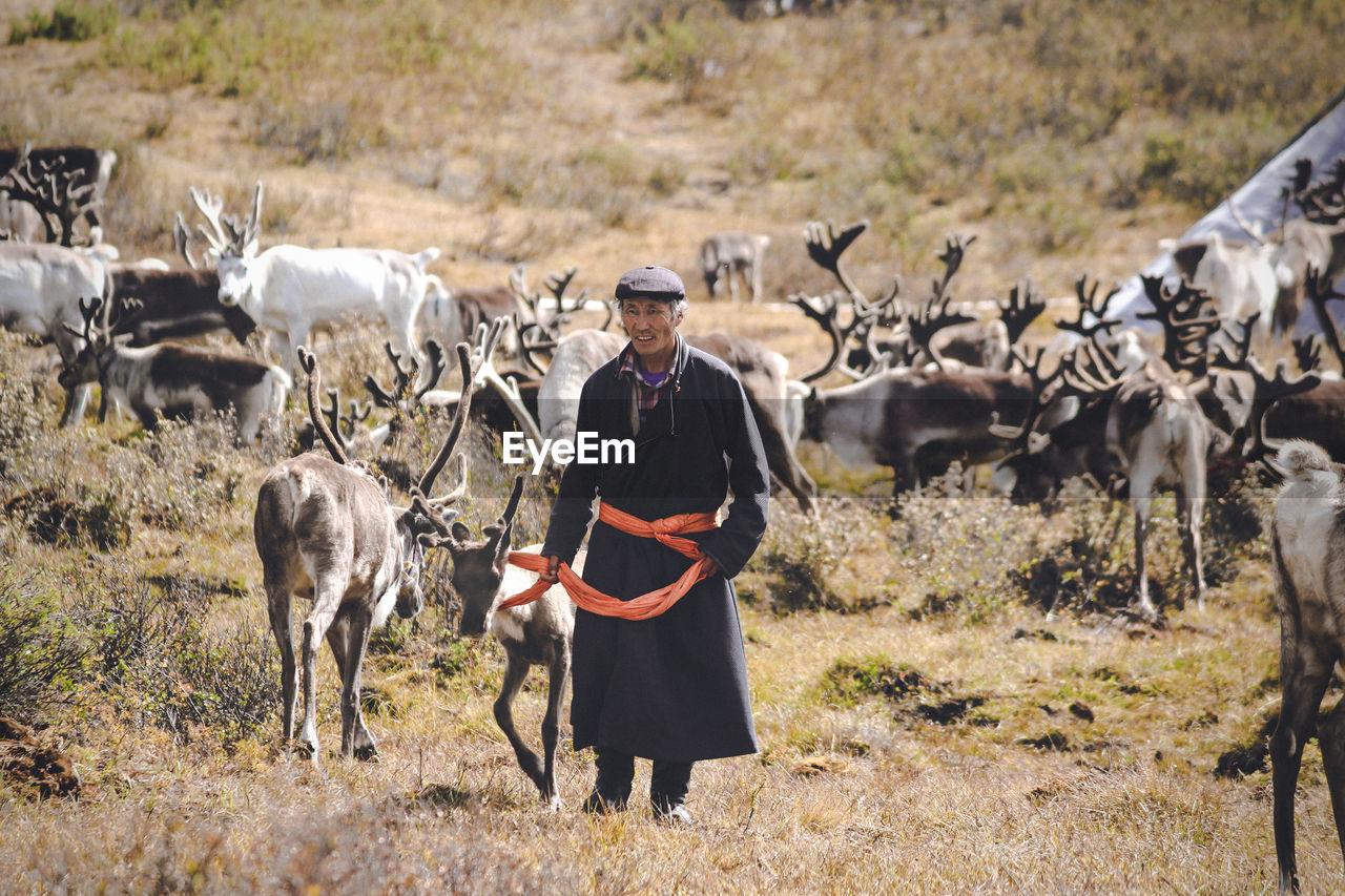 FULL LENGTH PORTRAIT OF COW STANDING ON FARM