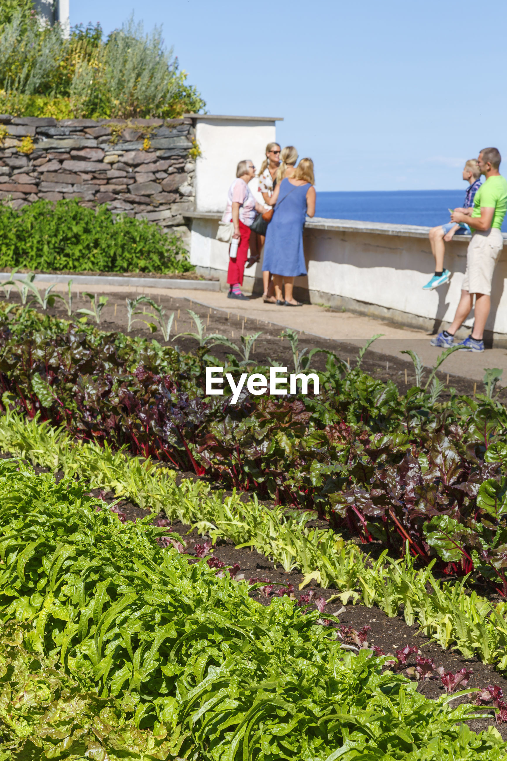 Vegetable garden with visitors in the summer