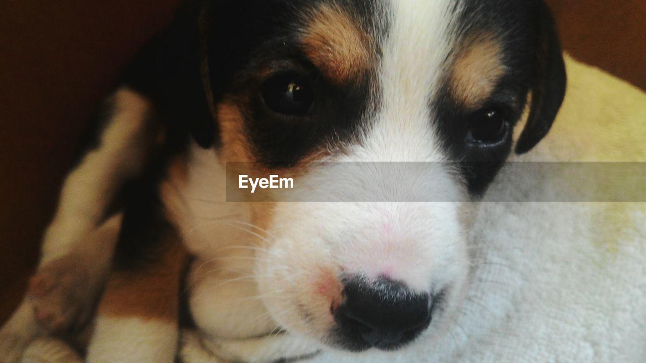 Dogs Dogslife Dog Love Eye Little Dog New Life