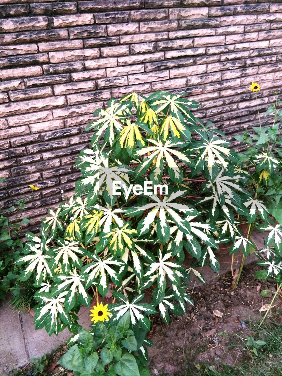 growth, plant, brick wall, outdoors, flower, nature, day, green color, high angle view, no people, beauty in nature, close-up, freshness