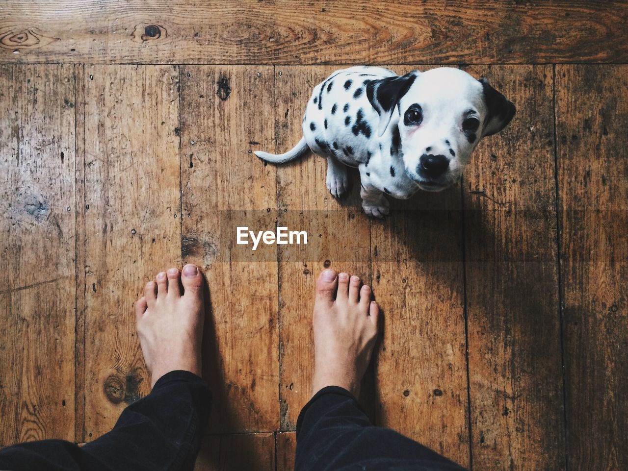 Low Section Of Person With Dog Standing On Floor