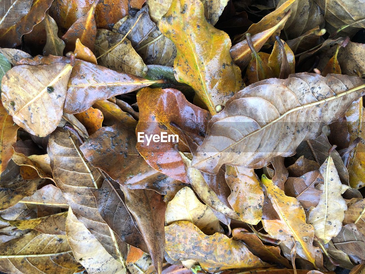 autumn, leaf, dry, change, leaves, nature, outdoors, no people, day, fragility, close-up, beauty in nature