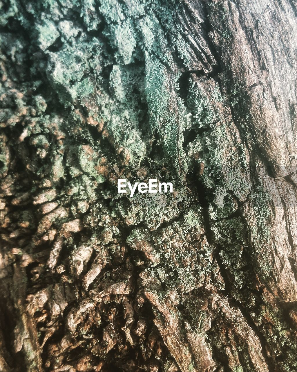tree trunk, textured, tree, rough, bark, full frame, close-up, backgrounds, day, no people, pattern, wood - material, nature, growth, outdoors