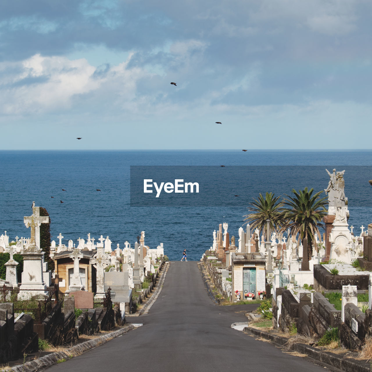 Road Amidst Waverley Cemetery Leading Towards Sea Against Sky