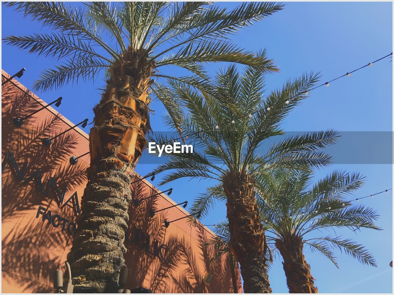 palm tree, tree, low angle view, tree trunk, growth, clear sky, day, no people, outdoors, beauty in nature, nature, sky
